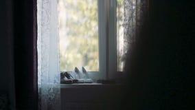 Anillos de bodas, zapatos de la novia y novio todavía que se coloca en ventana Mañana antes de la ceremonia la derecha del resbal almacen de metraje de vídeo
