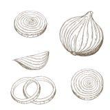 Anillos de cebolla fijados Fotografía de archivo