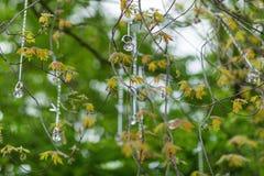 Anillos de compromiso que cuelgan en cintas en un árbol Foco selectivo Fotos de archivo