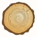 Anillos de crecimiento del árbol Antecedentes de madera del vector Imagenes de archivo