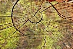 Anillos de madera Foto de archivo libre de regalías
