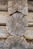 Anillos de madera texturizados madera áspera El gris cortó la rebanada de un árbol, mostrando edad y años Fotos de archivo