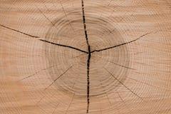 Anillos del año de un árbol Fotografía de archivo