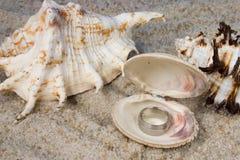 Anillos en Seashell imagen de archivo libre de regalías