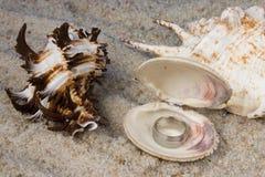 Anillos en Seashell fotografía de archivo