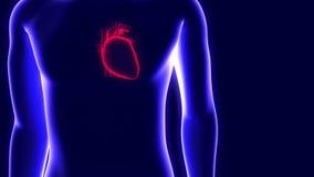 animação 3D de um holograma humano e de um coração batendo ilustração stock