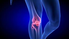 Animação da dor do joelho A varredura humana azul do corpo 3D da anatomia rende ilustração royalty free