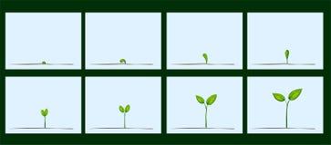 Animação da germinação da semente no solo Imagem de Stock Royalty Free