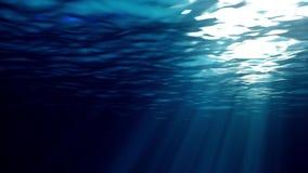 Animação dando laços de ondas de oceano dos raios claros de alta qualidade subaquáticos que brilham completamente Grande fuzileir vídeos de arquivo