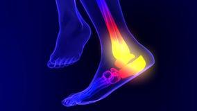Animação de esqueleto do raio X da dor do tornozelo ilustração stock
