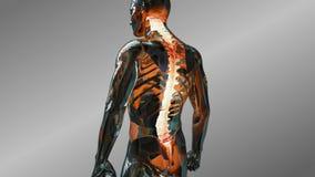 Animação humana da anatomia que mostra os discos espinais masculinos Varredura vertebral do disco do sistema esqueletal ilustração royalty free