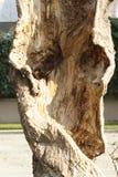 Anima dell'albero Fotografie Stock Libere da Diritti