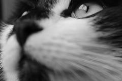 Anima dell'occhio Fotografia Stock