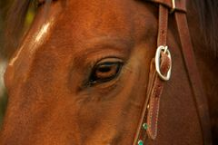 Anima di un cavallo Immagini Stock