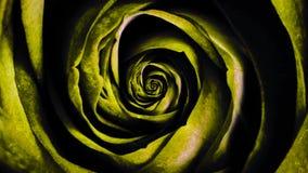 Animación abstracta de hacer girar el brote color de rosa amarillo Animación hermosa ilustración del vector