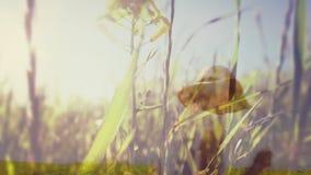 Animación de Digitaces de un campo de flor y de caminar de la mujer almacen de video