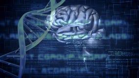 Animación de Digitaces de un cerebro y de la hélice de la DNA ilustración del vector