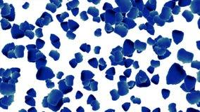 Animación de levantamiento de las rosas de los pétalos en el fondo blanco Hojas azules de levantamiento de la flor Pétalos de lev ilustración del vector