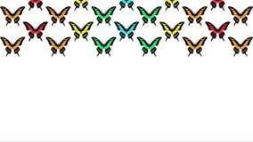 Animación de mariposas multicoloras en el fondo blanco almacen de video