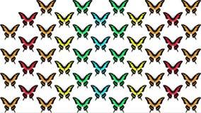 Animación de mariposas multicoloras en el fondo blanco metrajes