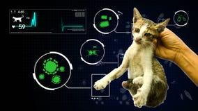 Animación del análisis el patógeno del germen del fondo gifographic del gato del animal y del animal doméstico para la educación  libre illustration