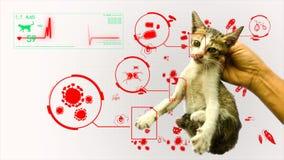 Animación del análisis el patógeno del germen del gato del animal y del animal doméstico gifographic en el fondo blanco para la e metrajes