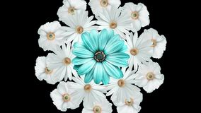 Animación del ramo realista de la flor con las margaritas blancas que se mueven alrededor con una flor azul grande en el centro n stock de ilustración