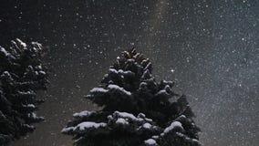 Animación hermosa del timelapse de las estrellas del centelleo Árbol de pino metrajes