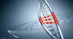 Animación loopable inconsútil 8k 4k UHD de la estructura del filamento de la DNA libre illustration