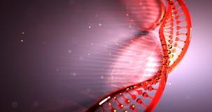 Animación loopable inconsútil 4k UHD de la estructura del filamento de la DNA almacen de video