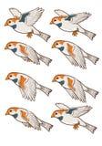 Animación Sprite del vuelo del gorrión Foto de archivo libre de regalías