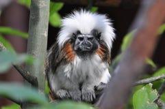 animais Foto de Stock Royalty Free
