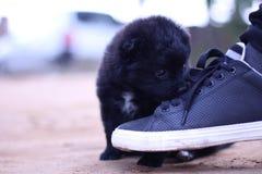 animais Fotos de Stock