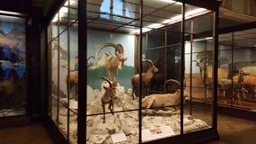 animais Foto de Stock