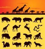 Animais africanos ilustração do vetor