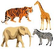 Animais africanos Foto de Stock