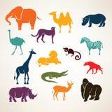 Animais africanos Imagens de Stock Royalty Free