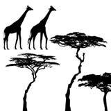 Animais africanos, giraffe, silhuetas do vetor Fotografia de Stock