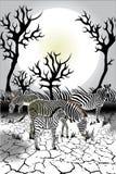 Animais - animais selvagens - zebra Imagens de Stock