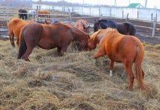 Animais bonitos e graciosos no rancho Imagem de Stock