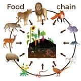 Animais da cadeia alimentar ilustração do vetor