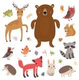 Animais da floresta Grupo do vetor Coleção de caráteres bonitos Imagem de Stock Royalty Free