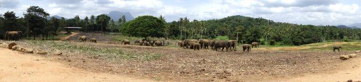 Animais da selva da natureza das nuvens dos elefantes Foto de Stock