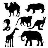 Animais de África Imagens de Stock