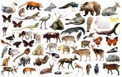 Animais de Ásia isolados Fotos de Stock Royalty Free