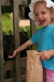 Animais de alimentação Foto de Stock Royalty Free