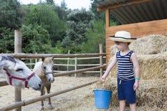Animais de alimentação do menino de exploração agrícola foto de stock