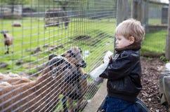 Animais de alimentação do menino pequeno da criança no jardim zoológico Fotos de Stock Royalty Free
