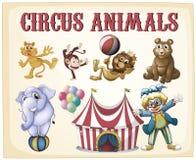 Animais de circo Foto de Stock