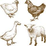 Animais de estimação ilustração do vetor